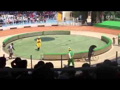 monos oso carrera ciclismo
