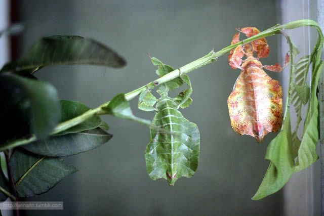 insecto hoja (11)