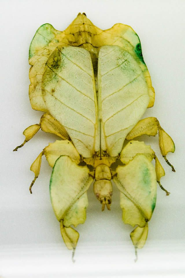 insecto hoja (9)