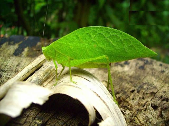 insecto hoja (7)
