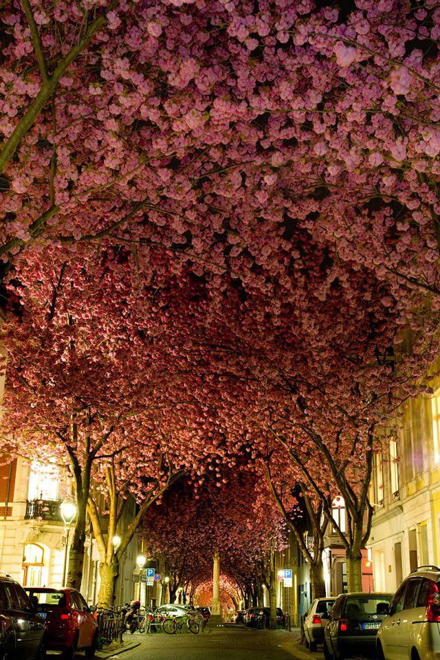 Túnel Cherry Blossom