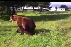 trucos osos