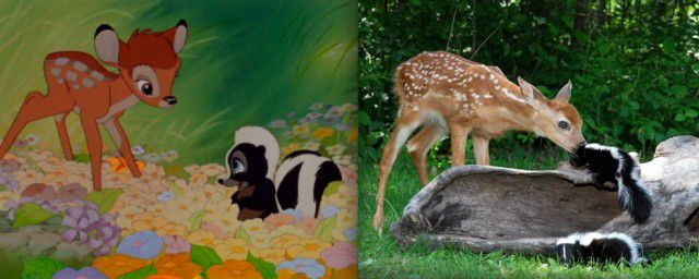 Animales Disney vida real (20)