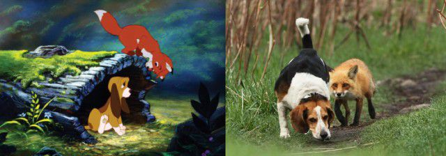 Animales Disney vida real (2)