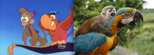 Animales Disney vida real (11)