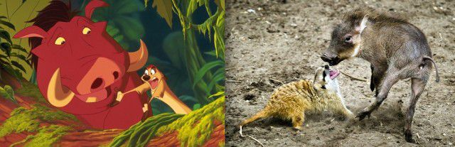 Animales Disney vida real (9)