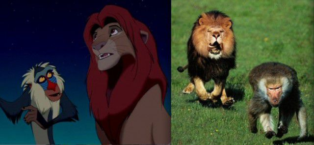 Animales Disney vida real (1)