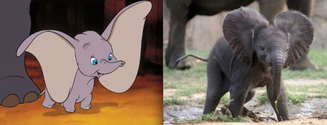 Animales Disney vida real (6)
