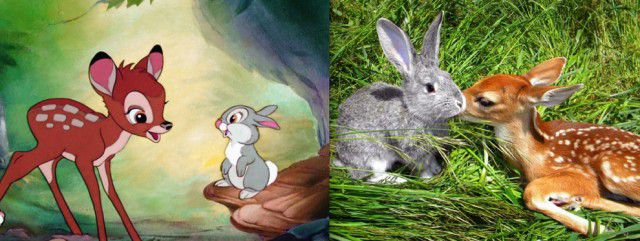 Animales Disney vida real (19)