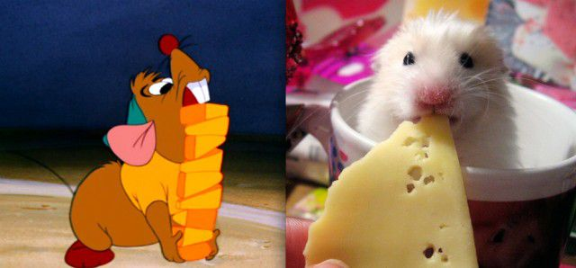 Animales Disney vida real (18)