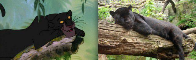 Animales Disney vida real (14)