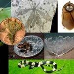 Las nuevas especies del 2013