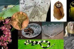 Top nuevas especies del 2013