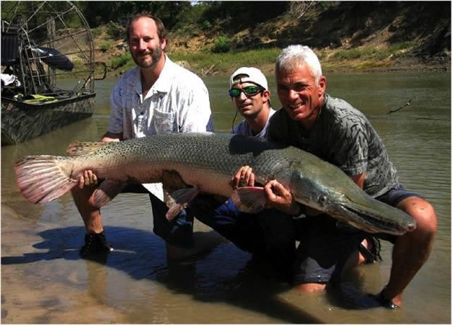 Monstruos de Río Jeremy Wade (21)
