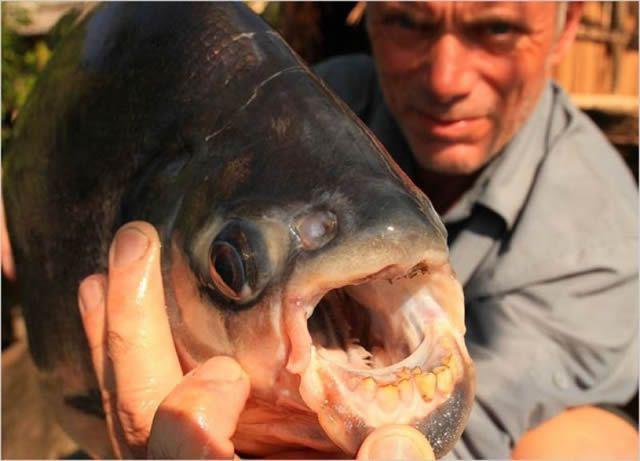 Monstruos de Río Jeremy Wade (4)