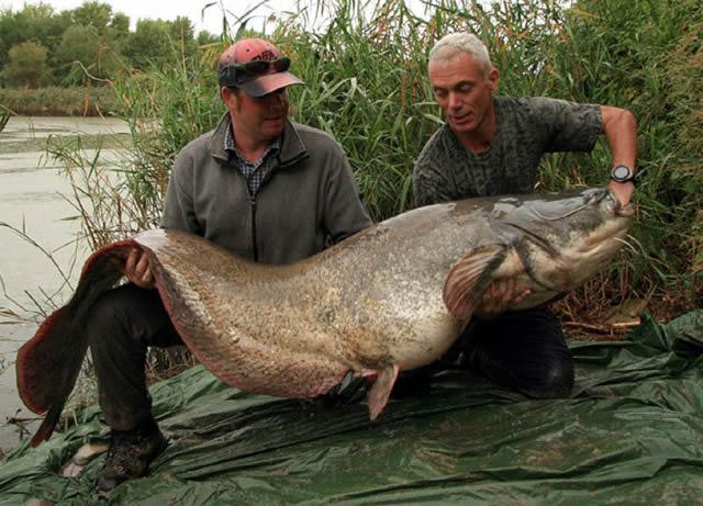 Monstruos de Río Jeremy Wade (2)