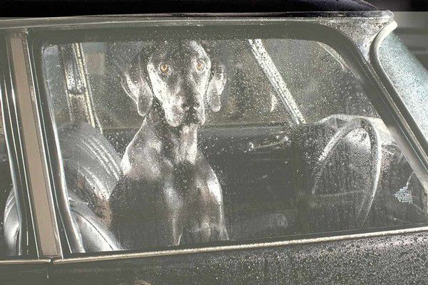 The Silence of Dogs in Cars (22)