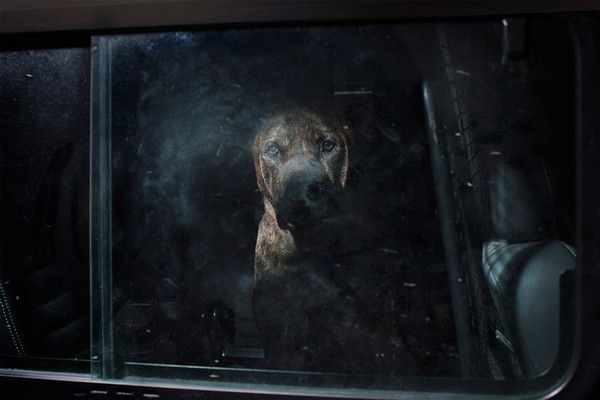 The Silence of Dogs in Cars (15)