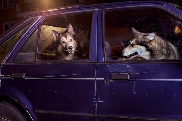The Silence of Dogs in Cars (6)