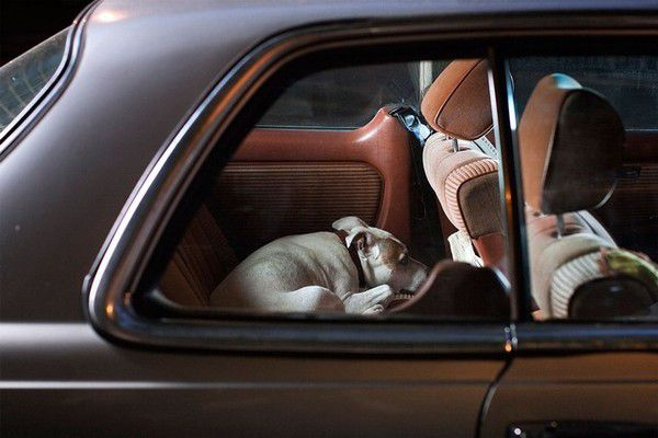 The Silence of Dogs in Cars (4)