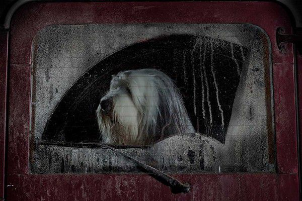 The Silence of Dogs in Cars (3)
