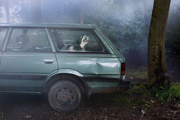The Silence of Dogs in Cars (14)