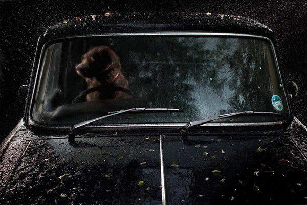 The Silence of Dogs in Cars (12)