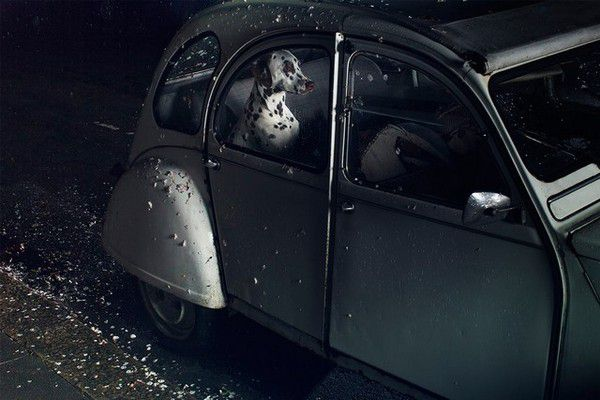 The Silence of Dogs in Cars (10)