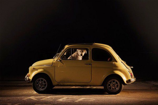 The Silence of Dogs in Cars (9)