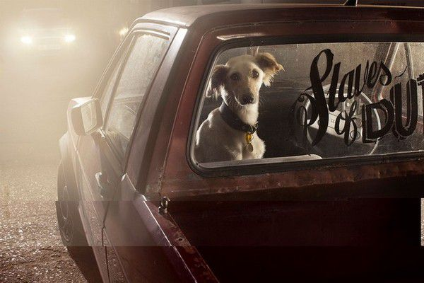 The Silence of Dogs in Cars (8)