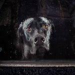 'The Silence of Dogs in Cars' – La espera de los perros por sus dueños