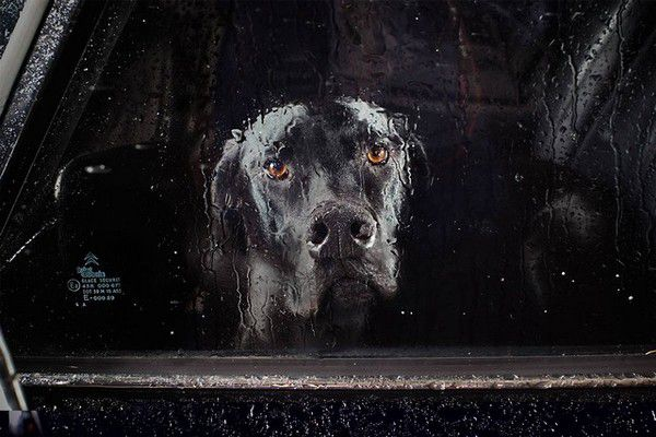 The Silence of Dogs in Cars (7)