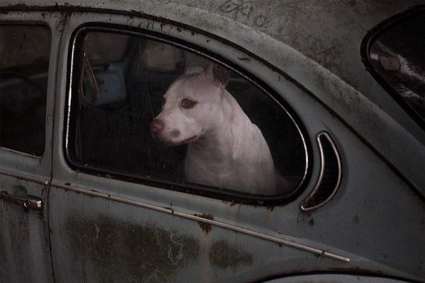 The Silence of Dogs in Cars (19)