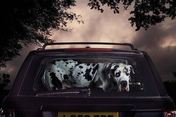 The Silence of Dogs in Cars (18)