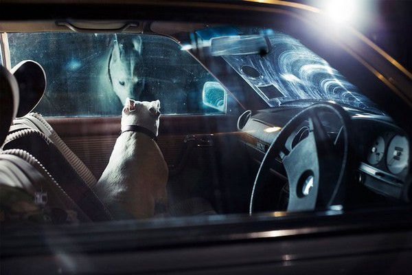 The Silence of Dogs in Cars (16)