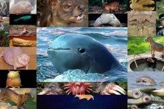 21 extraños animales que probablemente nunca has visto antes
