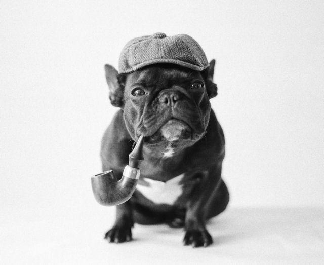 Trotter maestro canino del disfraz (12)