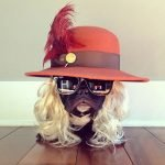 Trotter, el maestro canino del disfraz