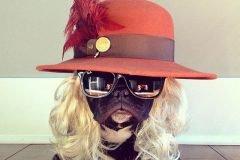 Trotter maestro canino del disfraz (11)