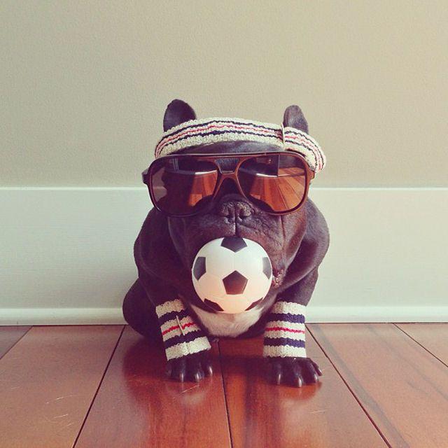 Trotter maestro canino del disfraz (9)