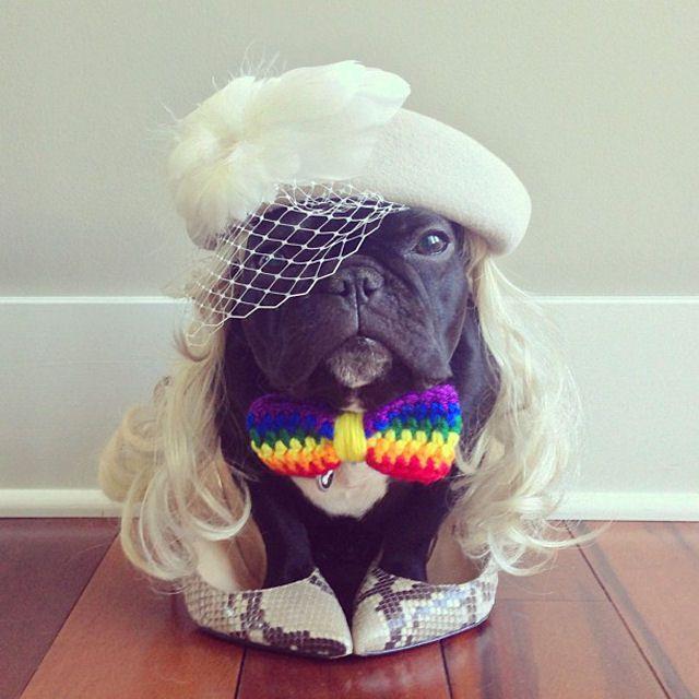 Trotter maestro canino del disfraz (8)
