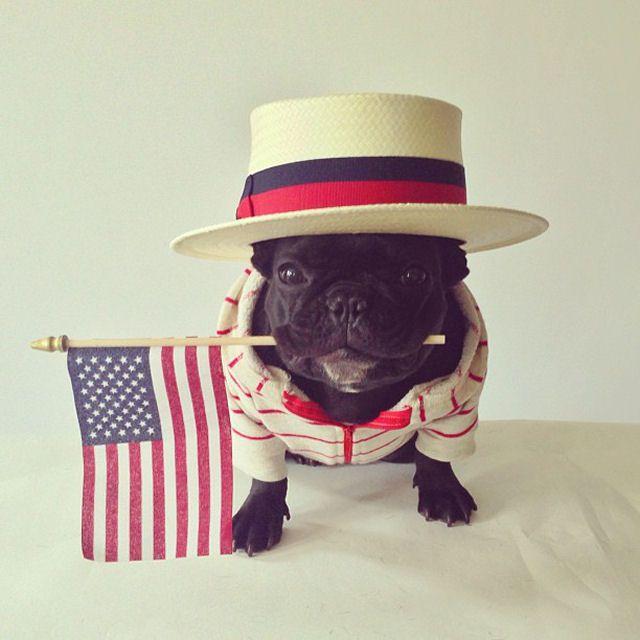 Trotter maestro canino del disfraz (6)