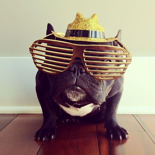 Trotter maestro canino del disfraz (4)