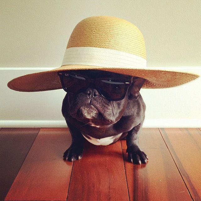 Trotter maestro canino del disfraz (3)