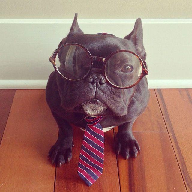 Trotter maestro canino del disfraz (2)