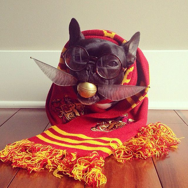 Trotter maestro canino del disfraz (1)
