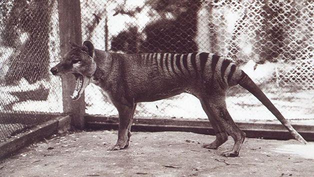 15 animales extintos en los últimos 250 años (1)