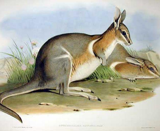 15 animales extintos en los últimos 250 años (19)