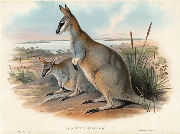15 animales extintos en los últimos 250 años (18)