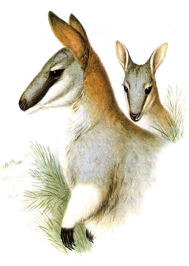 15 animales extintos en los últimos 250 años (5)